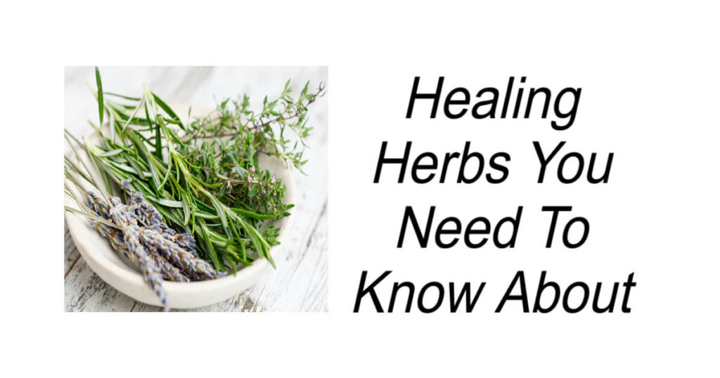 Healing Herbs You Need To Know About