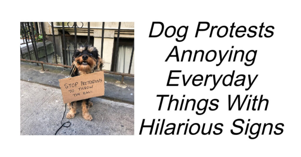 Dog Protests Annoying Everyday Things