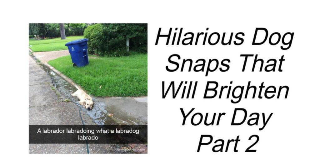 Hilarious Dog Snaps